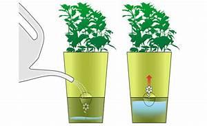 Bewässerungssystem Balkon Selber Bauen : kr utertopf mit bew sserungssystem gem se obst kr uter ~ Whattoseeinmadrid.com Haus und Dekorationen