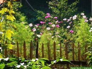 Gartengestaltung Bauerngarten Bilder : einen bauerngarten planen anlegen und bepflanzen mit pflanzentipps ~ Markanthonyermac.com Haus und Dekorationen