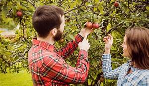 Mein Apfelbaum Anleitung : was hat mein apfelbaum ~ Lizthompson.info Haus und Dekorationen