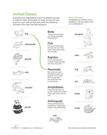 best 25 classifying animals ideas on animal
