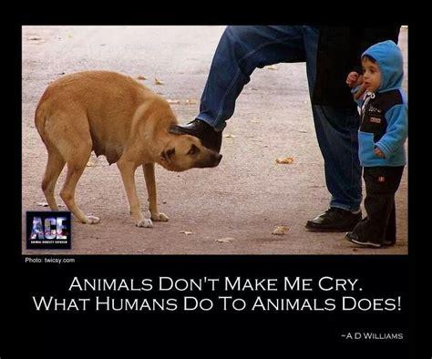 adopt  furry friend   hero images