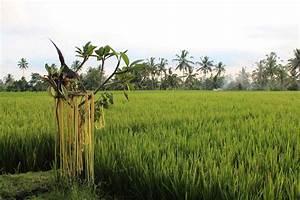 Nelle U0026 39 S Blog  Bali  Pretty Things I Saw - Or