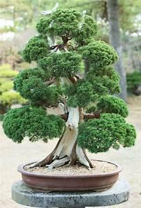 17 meilleures idees a propos de bonsai sur pinterest bonsais With comment realiser un jardin zen 4 17 meilleures idees 224 propos de jardins zen sur pinterest