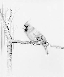 Cardinal Bird Drawing Pencil Drawing Giclee Fine Art Print ...