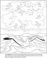 Coloring Albatross Pages Colouring Books Coloriages Mer Getdrawings Adult Drawings sketch template