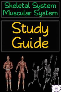 Skeletal System  U0026 Muscular System  Study Guide