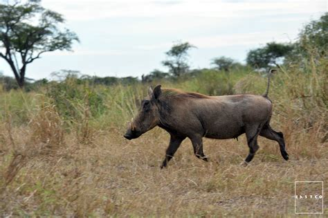 animals eat plants both opportunity omnivorous warthogs given meaning they