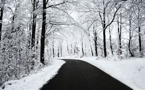 Road Snow Black White Winter Forest Nature