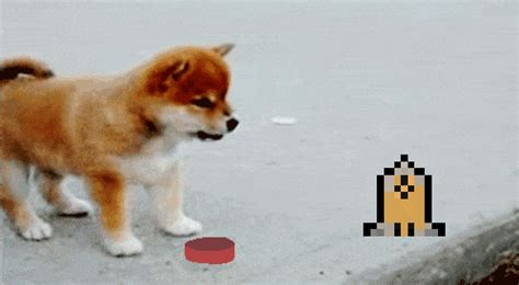 Much Stable, Very Wow! : dogecoin