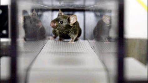 Gene-alteration Makes Super Mice