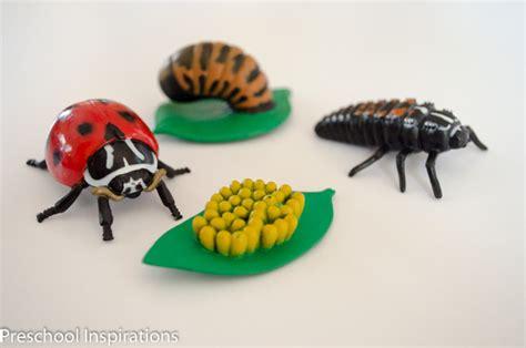 ladybug facts for preschool inspirations 651 | Ladybug Facts Preschool Inspirations 4