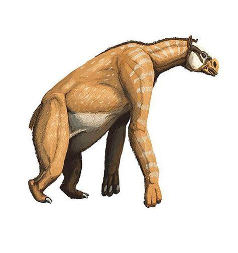 prehistoric horse animals chalicotherium mammal meet thoughtco dinosaurs mammals walking