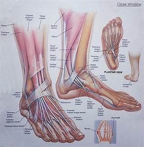 Anne Reflexology  Reflexology And Foot Mobilisation