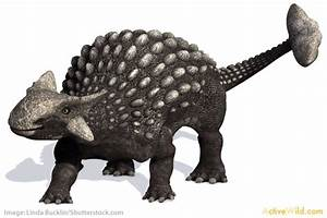 List Of Dinosaurs U2019 Dinosaur Names With Pictures U0026 Information
