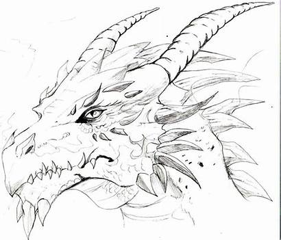Dragon Cool Drawing Drawings Head Dragons Sketch