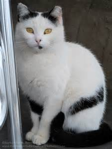 Cat with Unusual Markings