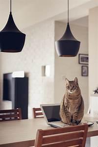 The, Perfect, U0026, 39, Cat, House, U0026, 39