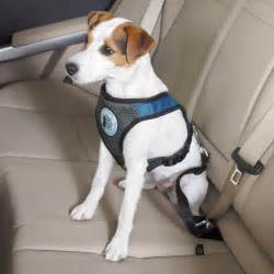 Car Seat Harness For Dogs, Car, Get Free Image About