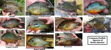 sefff panfish flies notebook updated  south