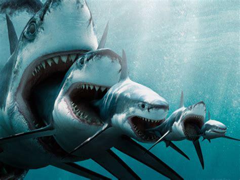 increased shark attacks  surfers global warming  blame surftherenowcom