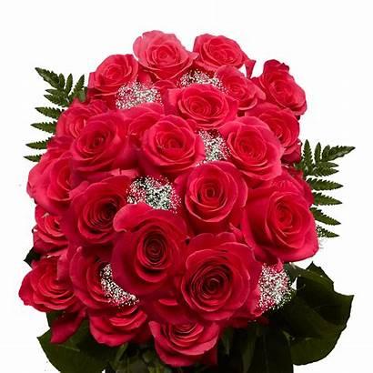 Roses Dozen Flowers Filler Fillers Bouquets Globalrose