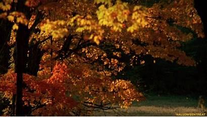Fall Autumn Corn Hay Bale Re Reasons