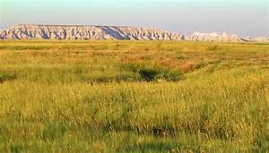 Characteristics Of Grassland Biomes Sciencing