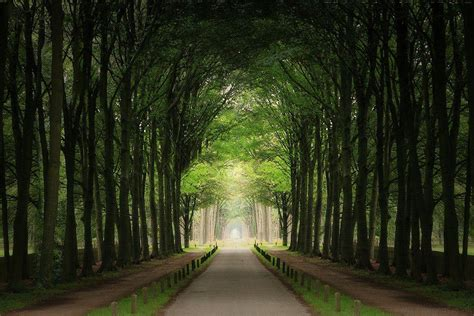 amazing tree lined path azee