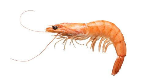 National Pet Aid Awareness Month Becoming Certified With Shrimp Allergies Should Avoid Taking Glucosamine
