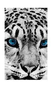 White Tiger Blue Eyes Wallpaper - Vote Wallpaper