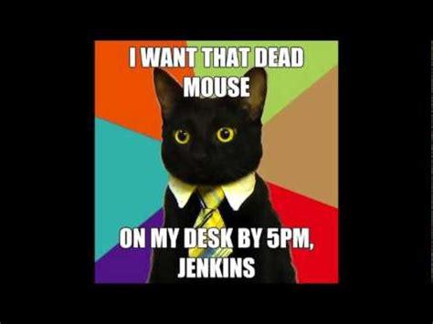 Business Cat Meme Compilation! Youtube