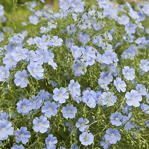 plantes pour terrasse ensoleillee liste ooreka With tapis chambre bébé avec parfum fleur de rocaille