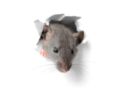 Wie Schnell Ist Eine Maus by Pfefferminz 246 L Gegen M 228 Use So Einfach M 228 Use Aus Dem Haus