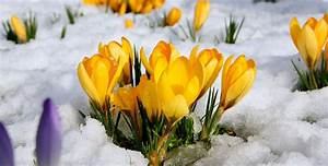Top 10 early signs of spring to look out for (PHOTOS ...