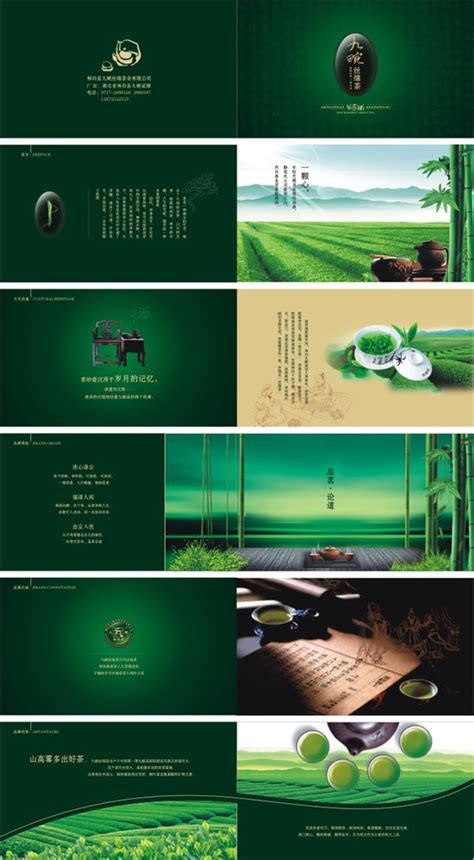 green tea brochure design vector material