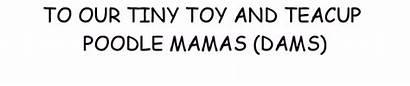 Mamas Akc Registered
