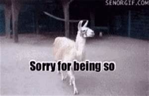 Llama GIF - Find & Share on GIPHY