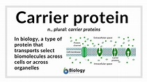 Carrier protein - Definition and Examples - Biology Online ...