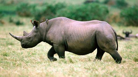 Rhino HD Wallpapers Free Download