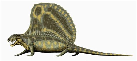 New Dimetrodon Fossil « Teaching Sapiens