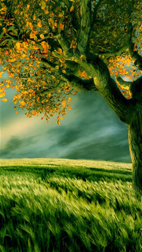hd wallpapers   beautiful nature mobile image