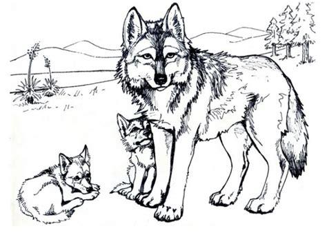 wolf vorlagen kostenlos ausmalbilder wolf malvorlagen ausdrucken 1