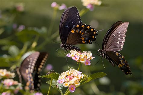 Butterfly Nature Insects Macro Zoom Close Up