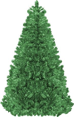 blank christmas trees  decorate