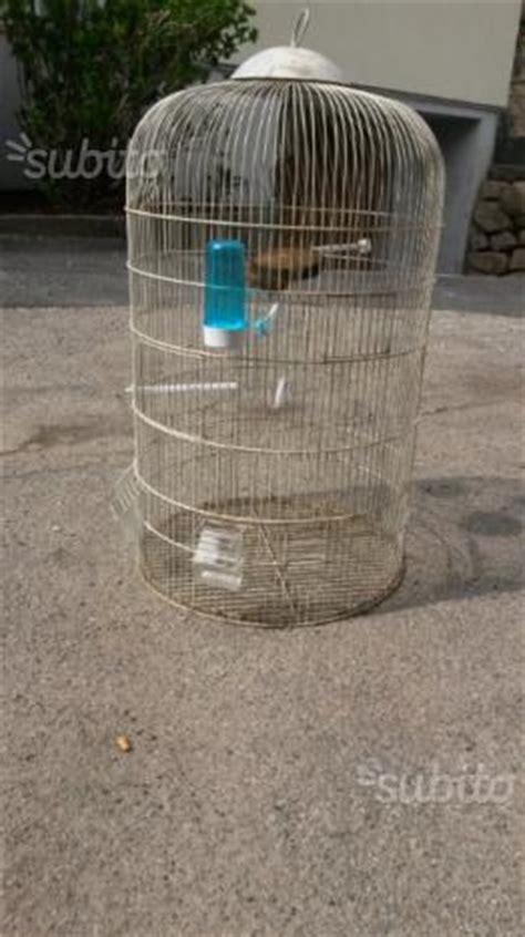 riproduzione cardellini in gabbia gabbia per cardellini posot class