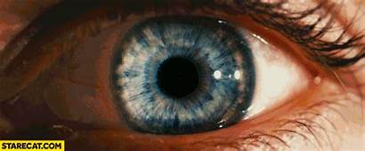 Eyes Human Animation Retinas Starecat