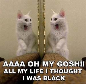 Funny Cat Pictures With Captions   Baby kittens and cat ...