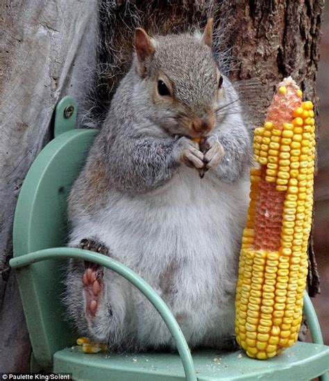 hes nuts  corn    chubby  squirrel puts