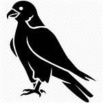 Icon Falcon Hawk Bird Eagle Peregrine Prey