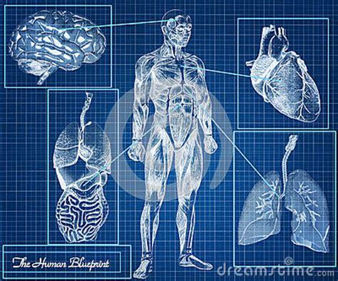human blueprint concept royalty  stock images